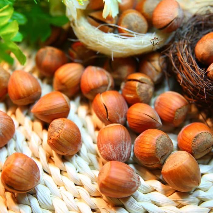 Noisetier Géante de Halles noisettes fruit