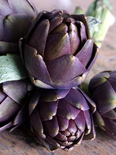 Artichaut vert et violet - le-potager