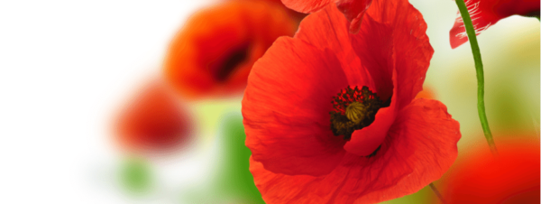 coquelicot full hd