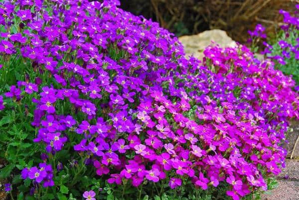 Plantes Vivaces
