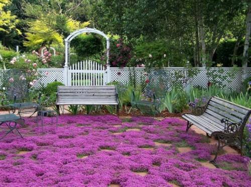 Plantes couvre-sols