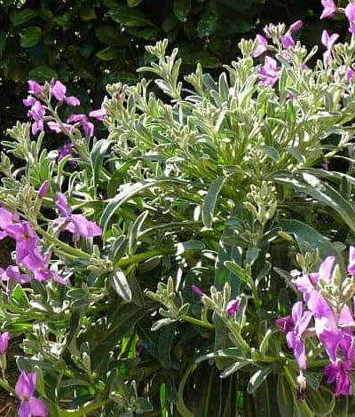 Plantes méditerrannéennes