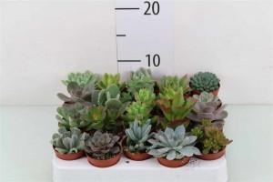 Plantes grasses - plantes-interieur