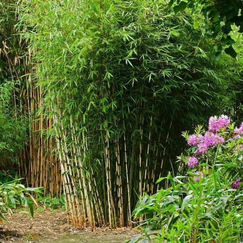 Le Jardin de Stéphane - Pas cher
