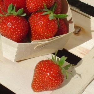 Fraisier Charlotte - petits-fruitiers