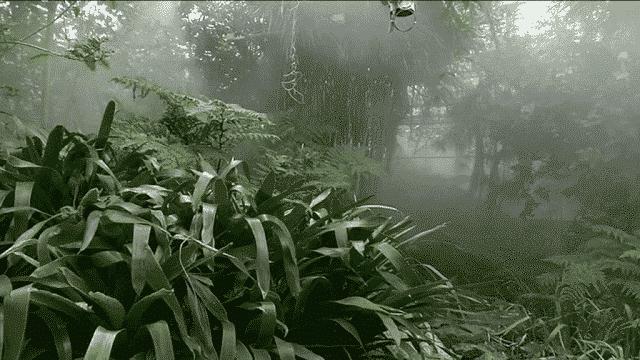 serres tropicales brest