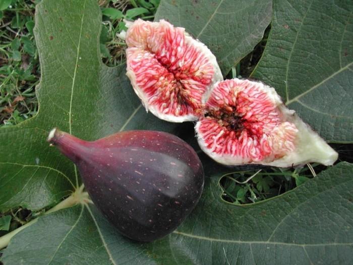 Figuier Noire de Caromb fruit figue chair