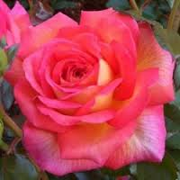 rosier michel desjoyeaux ®