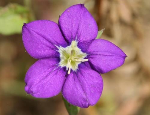 La flore bretonne toujours plus menacée
