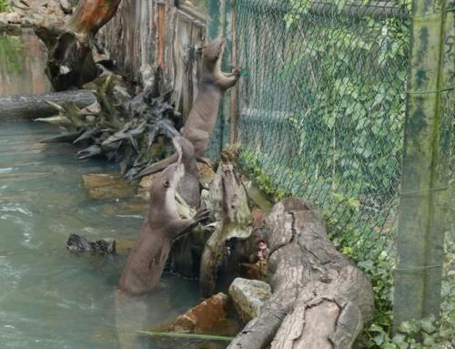 Multiples naissances au zoo de la Bourbansais : un pas de plus vers le maintien des espèces